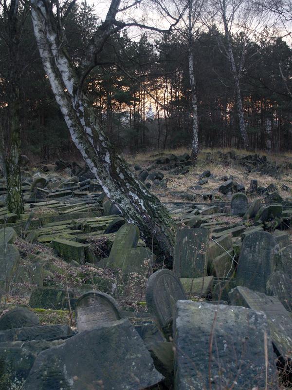 Cmenatrz Żydowski dziś jest porośnięty lasem / targowek.to
