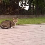 Ile dzikich kotów żyje w naszej dzielnicy?