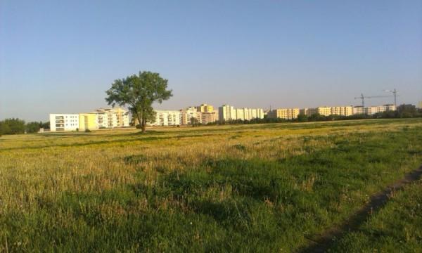 Jeśli spojrzeć z innej strony, to pole jest bardzo ładne  / fot. targowek.info