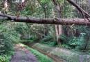 Las na Utracie nareszcie wypięknieje