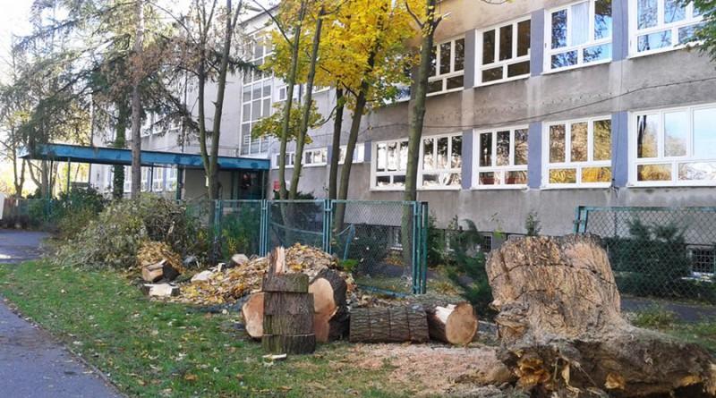 Zawalone drzewo przed liceum im. Czarnieckiego / fot. targowek.info