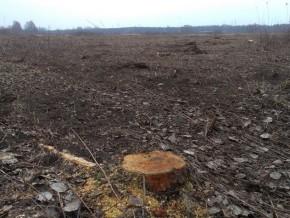Wniosek zapewne rozpatrzono pozytywnie, bo drzewa są już wycięte / fot. targowek.info