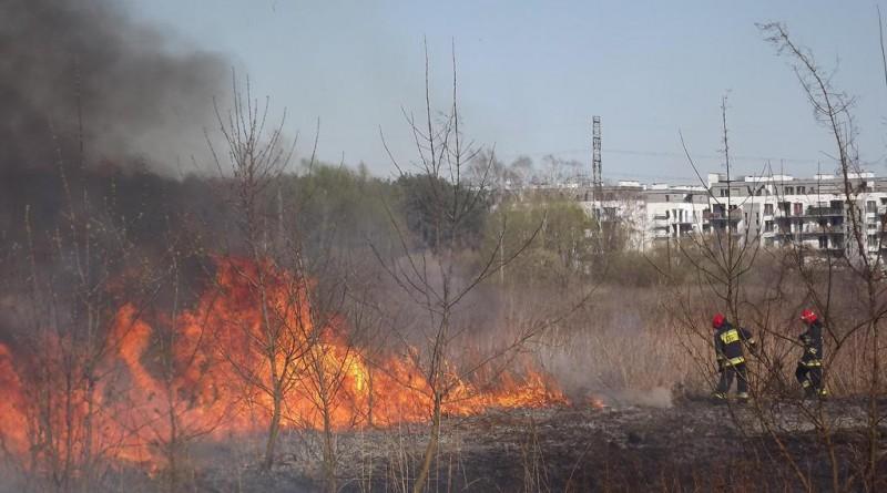 pożar traw na Bardowskiego