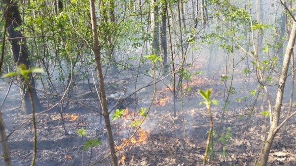 Pożar ściółki w Lesie Bródnowskim / fot. Straż Pożarna