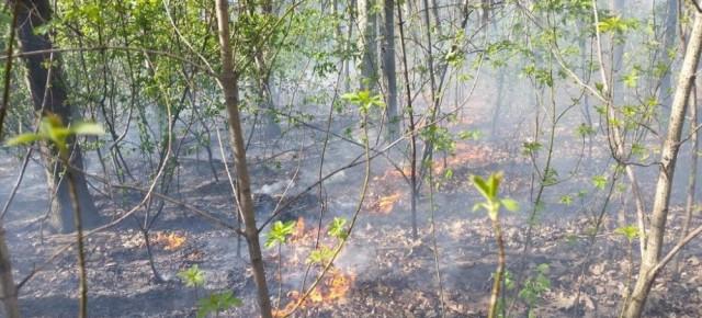 Pożar w Lesie Bródnowskim na zdjęciach strażaków