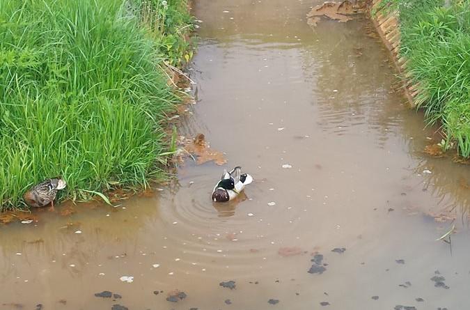 zanieczyszczenie kanalu Brodnowskiego5
