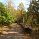 Susza i drwale w Lesie Bródnowskim