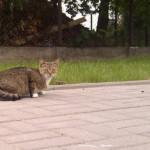 Gdzie zaczipować kota i psa na Targówku