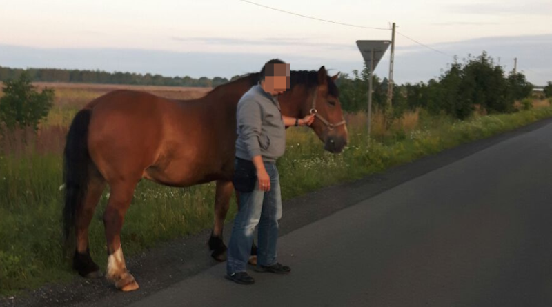 Koń / fot. Policja