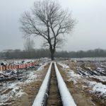 Najbardziej znane drzewo Targówka zostanie wycięte