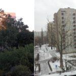 Podwórko przed i po wycince – znajdź różnicę